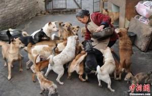 Grandma-Bai-dogs-550x349