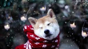 dog-under-snow-wallpaper